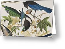 Yellow-billed Magpie Stellers Jay Ultramarine Jay Clark's Crow Greeting Card