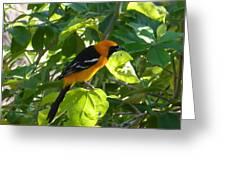 Orange Bird Greeting Card