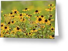 Yellow Black Eyed Susan Wildflowers In Summer Greeting Card