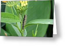 Yellow Black  White Caterpillar Greeting Card