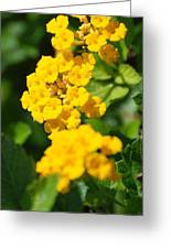 Yellow Blooms Greeting Card