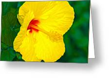 Yellow Blossom Greeting Card