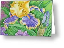 Yellow Blue Iris .2007 Greeting Card