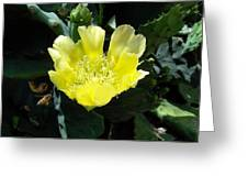 Yellow Bonnet, Cactus Greeting Card