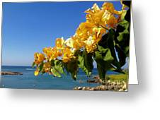 Yellow Bougainvillea Over The Mediterranean On The Island Of Cyprus Greeting Card
