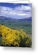 Yellow Broom Over Pasture In Dalefield Greeting Card