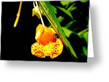 Yellow Burst Greeting Card