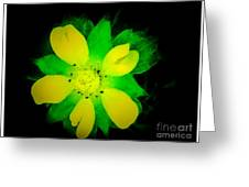 Yellow Buttercup On Black Background Greeting Card