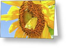 Yellow Butterfly And Sunflower Greeting Card