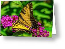 Yellow Butterfly In The Garden Greeting Card
