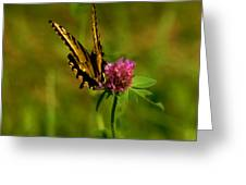 Yellow Butterfly Greeting Card