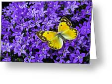 Yellow Butterfly On Mee Greeting Card
