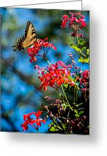 Yellow Butterfly On Red Flowers Greeting Card