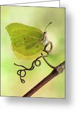Yellow Butterfly On The Branch Greeting Card