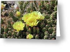 Yellow Cactus Blooms Greeting Card