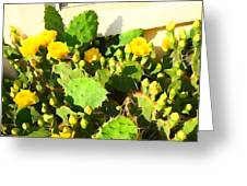 Yellow Cactus Blossoms 594 Greeting Card