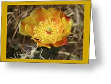 Yellow Cactus Flower On Display Greeting Card