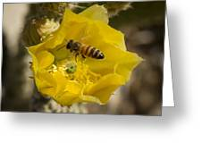 Yellow Cactus Flower With Wasp Greeting Card