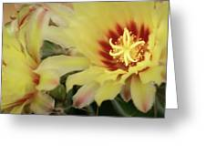 Yellow Cactus Plant Flower Greeting Card