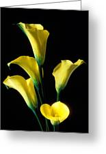 Yellow Calla Lilies  Greeting Card by Garry Gay