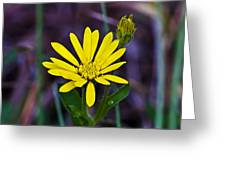 Yellow Camphorweed Greeting Card