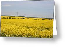 Yellow Canola Field Greeting Card