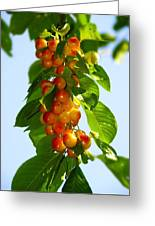 Yellow Cherries Greeting Card
