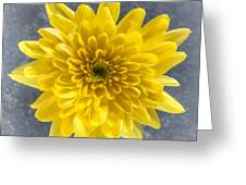 Yellow Chrysanthemum Flower Greeting Card