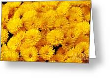 Yellow Chrysanthemums Greeting Card
