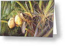 Yellow Coconuts From The Tropics  Greeting Card