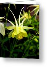 Yellow Columbine 1 Greeting Card