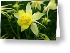 Yellow Columbine 3 Greeting Card