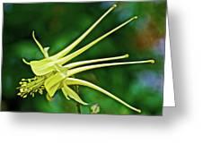 Yellow Columbine In Huntington Gardens In San Marino-california Greeting Card