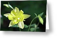 Yellow Columbine Squared Greeting Card