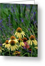 Yellow Coneflowers And Lavender 1633 H_2 Greeting Card