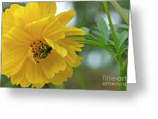 Yellow Cosmos Flower Greeting Card