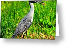 Yellow Crested Night Heron Catches A Fiddler Crab Greeting Card