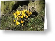 Yellow Crocus 1 Greeting Card