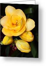 Yellow Crocus Closeup Greeting Card