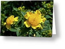 Yellow Crown Flower Greeting Card