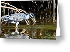 Yellow Crowned Night Heron Catches A Crab Greeting Card