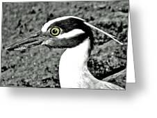 Yellow Crowned Night Heron. Greeting Card