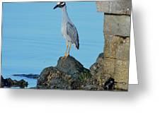 Yellow Crowned Night Heron Rocking It Out Greeting Card