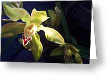 Yellow Cymbidium And Shadows Greeting Card