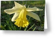 Yellow Daffodil 2 Greeting Card