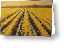 Yellow Daffodil Glow Greeting Card