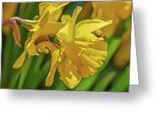Yellow Daffodil May 2016. Greeting Card