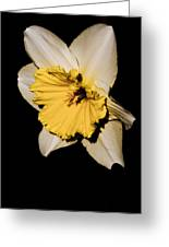Yellow Daffodil Greeting Card