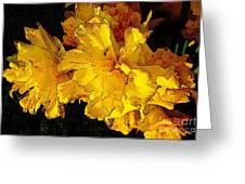 Yellow Daffodils 4 Greeting Card