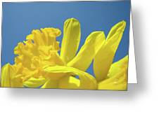 Yellow Daffodils Flowers Art Blue Sky Spring Baslee Troutman Greeting Card